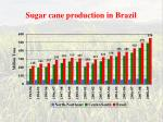 sugar cane production in brazil