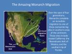 the amazing monarch migration