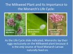 the milkweed plant and its importance to the monarch s life cycle