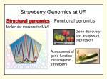 strawberry genomics at uf23