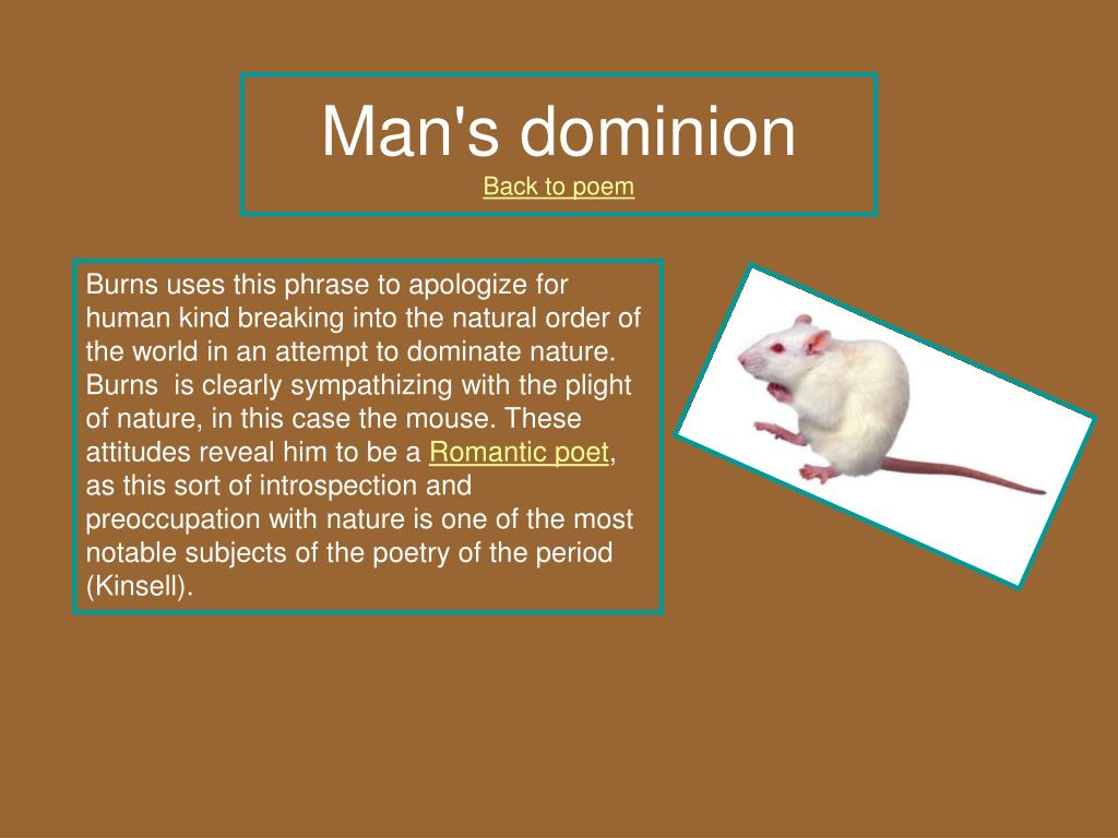 """the major theme of dreams that can never materialized in to a mouse by robert burns Adv eng 3 blog post 2 george realizes that their dream will most likely never see the destruction of a dream in """"to a mouse"""" by robert burns."""