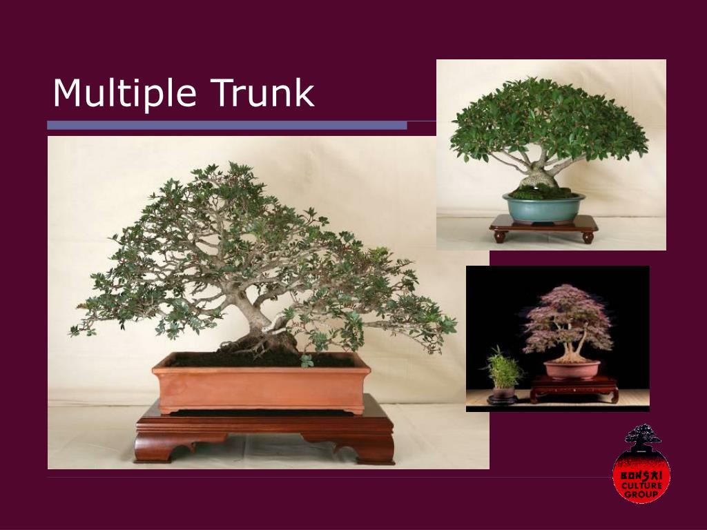 Multiple Trunk