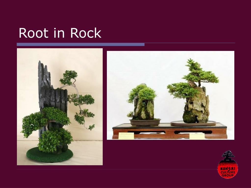 Root in Rock