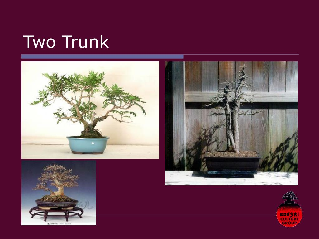 Two Trunk