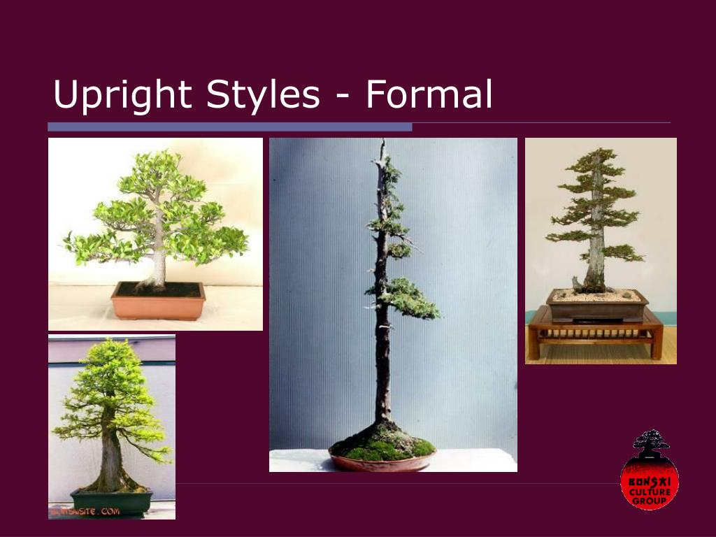 Upright Styles - Formal