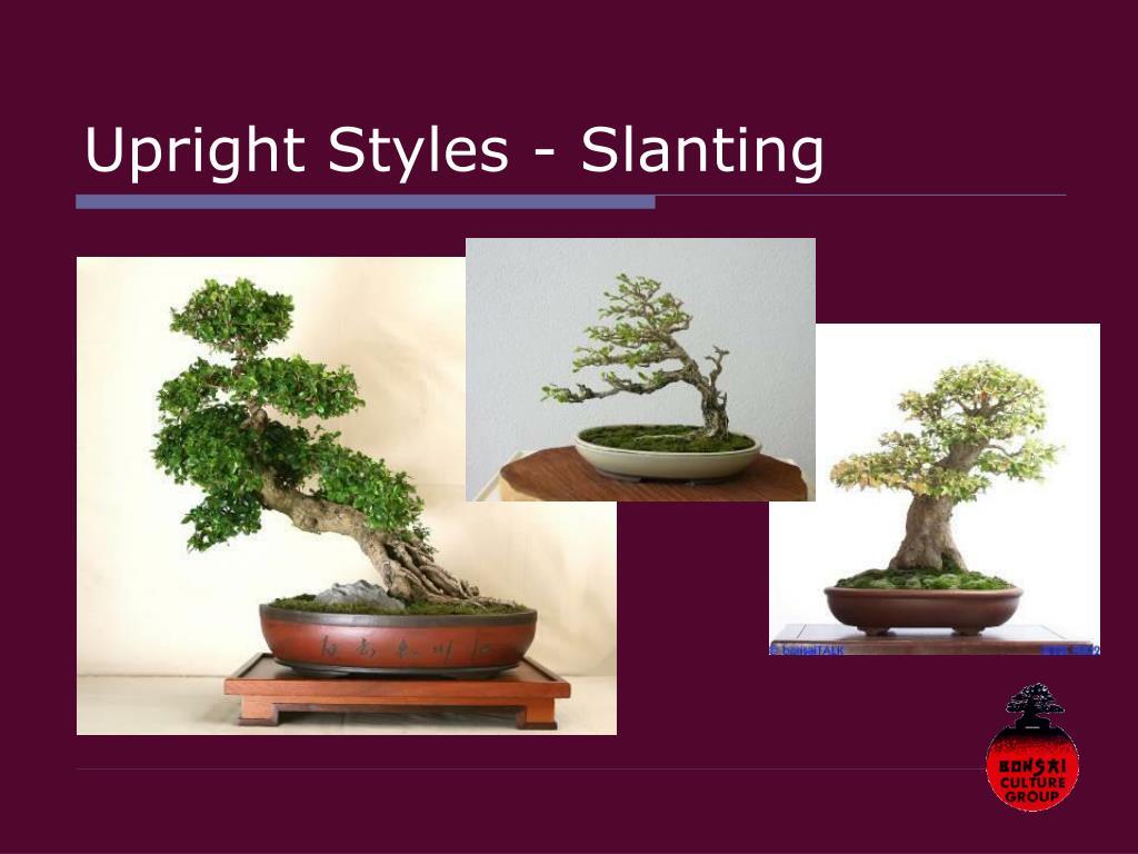 Upright Styles - Slanting