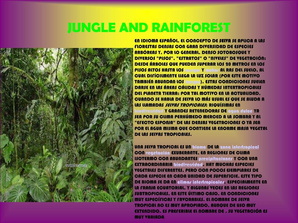 JUNGLE AND RAINFOREST