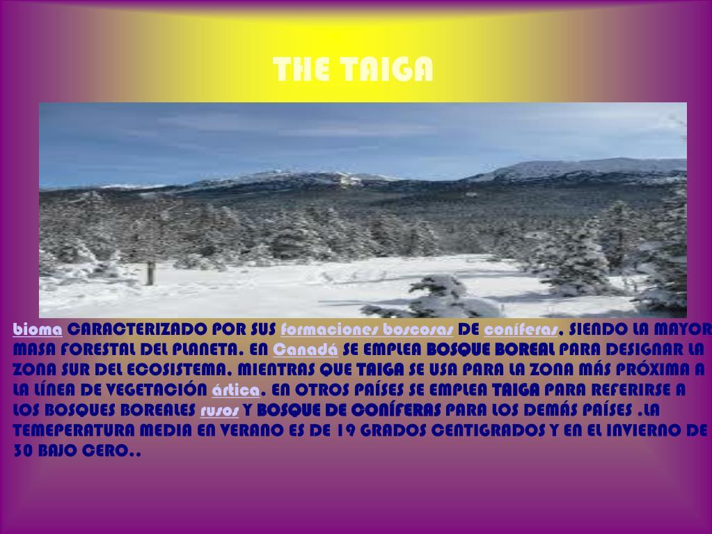 THE TAIGA