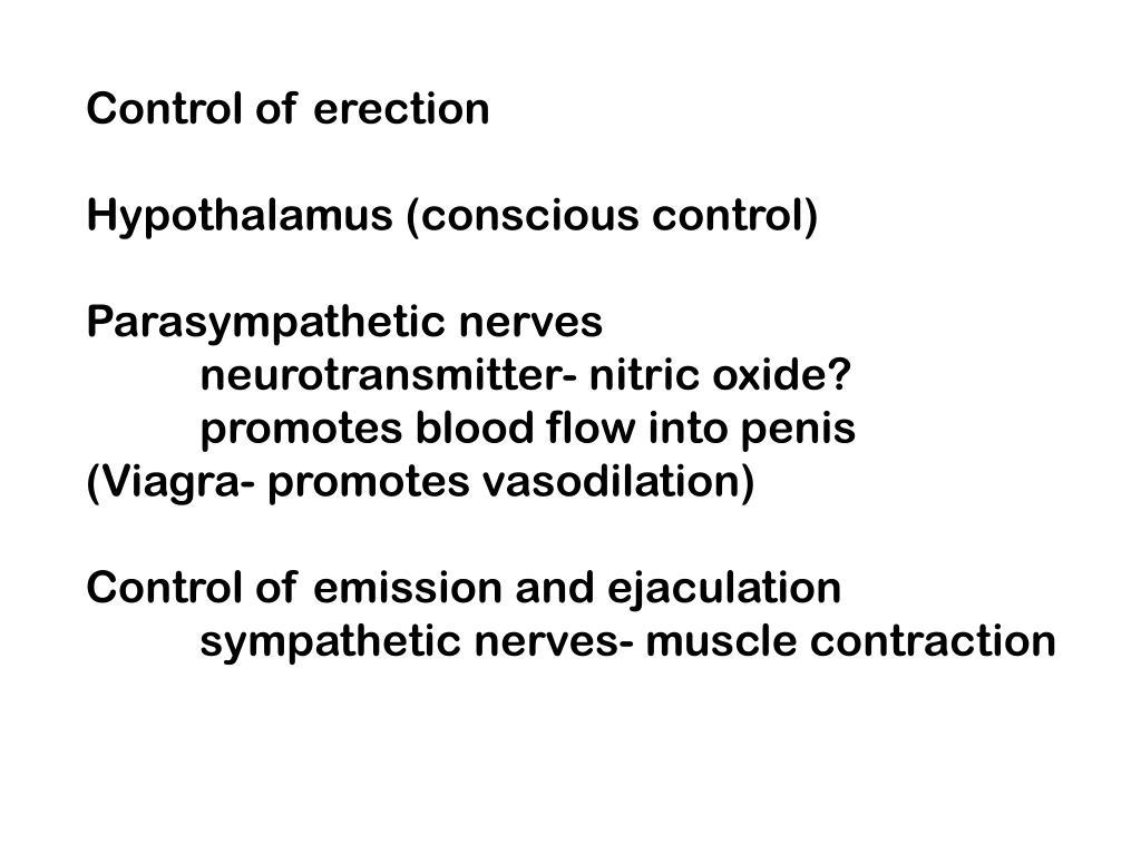 Control of erection