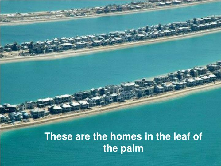 These are the homes in the leaf of the palm