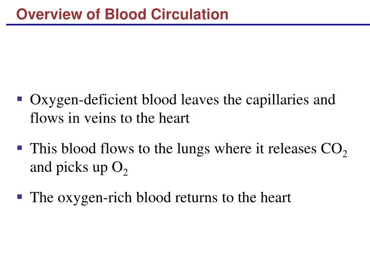 Overview of blood circulation1