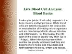 live blood cell analysis blood basics11