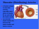 muscular distributing arteries19