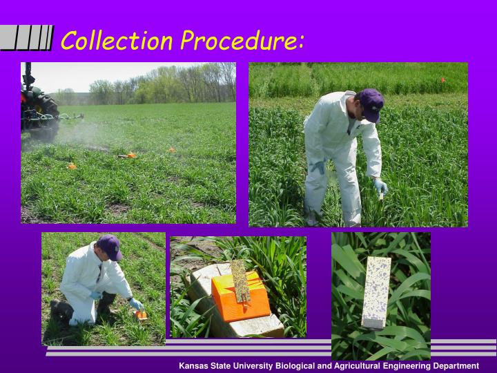 Collection Procedure: