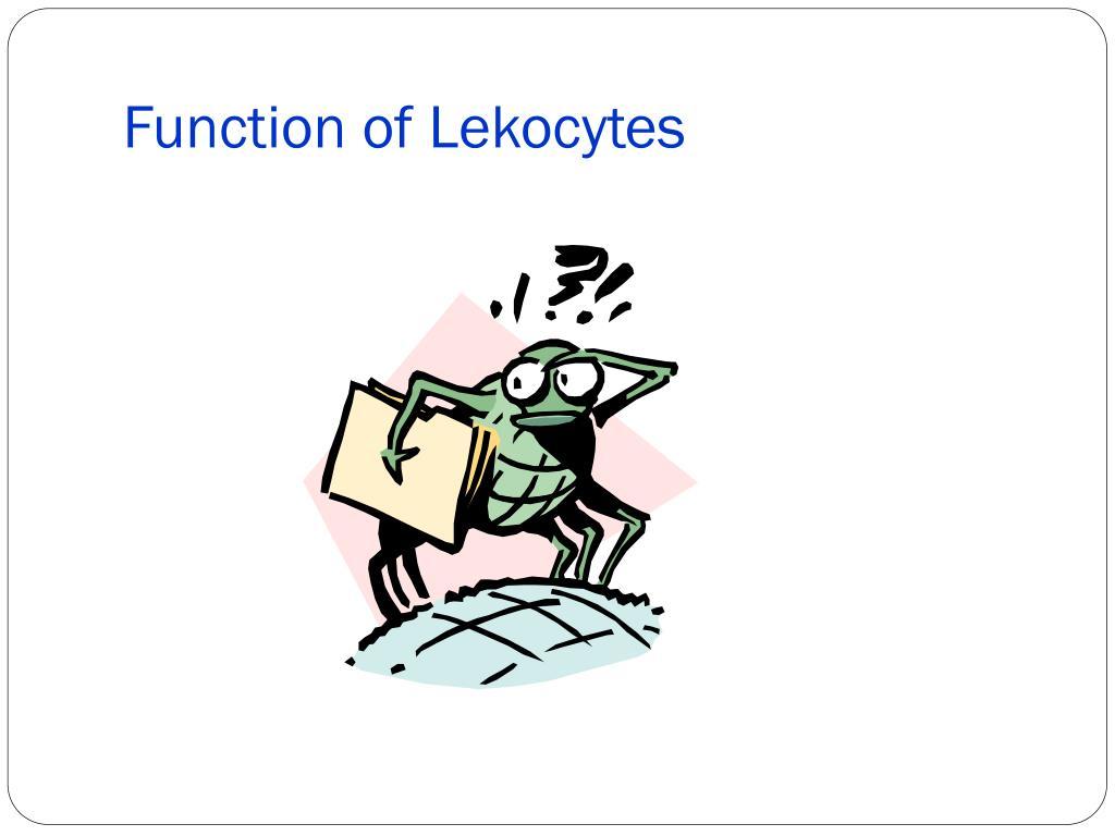 Function of Lekocytes