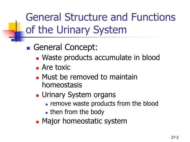 General structure and functions of the urinary system