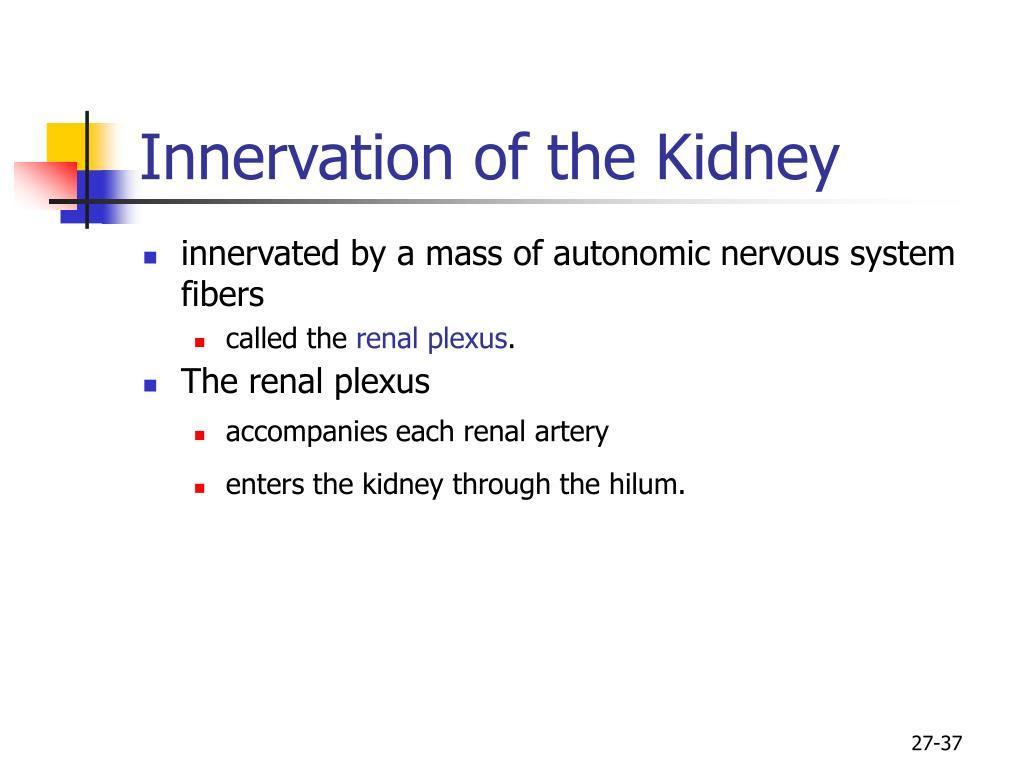Innervation of the Kidney