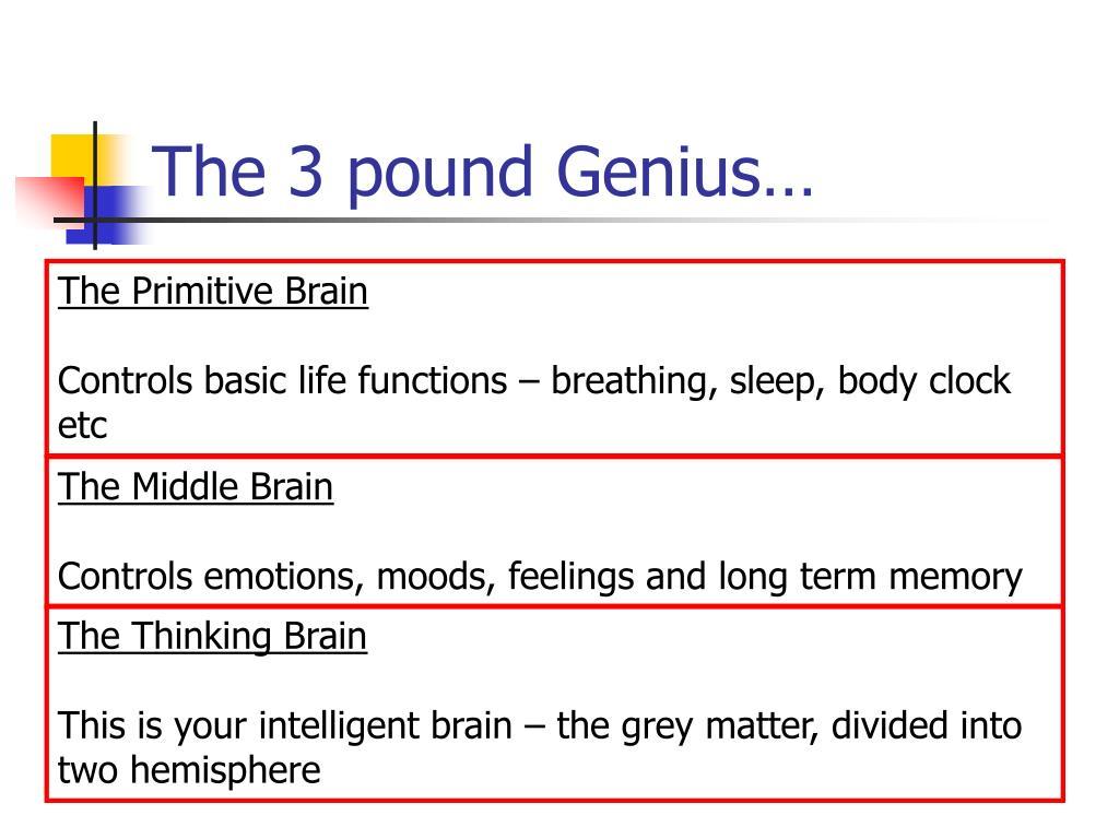 The 3 pound Genius…