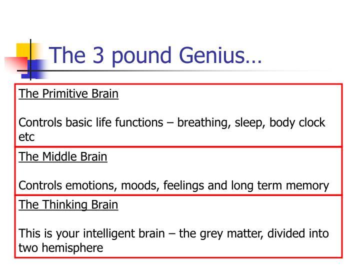 The 3 pound genius
