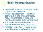 brain reorganization