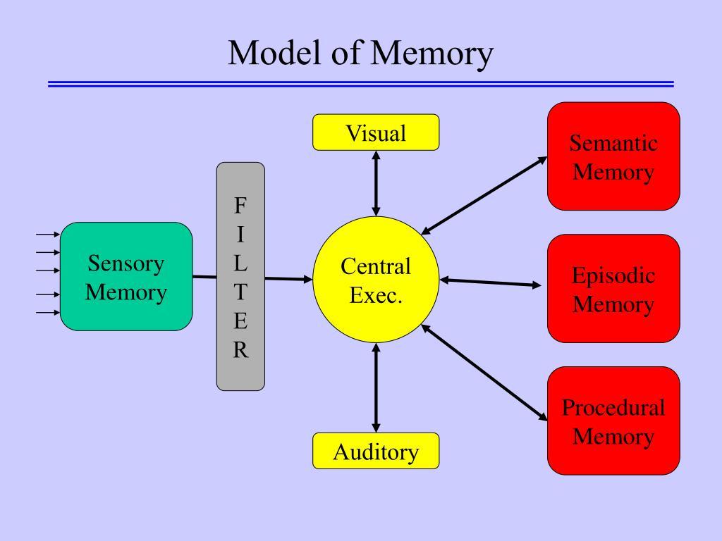 sensory memory model