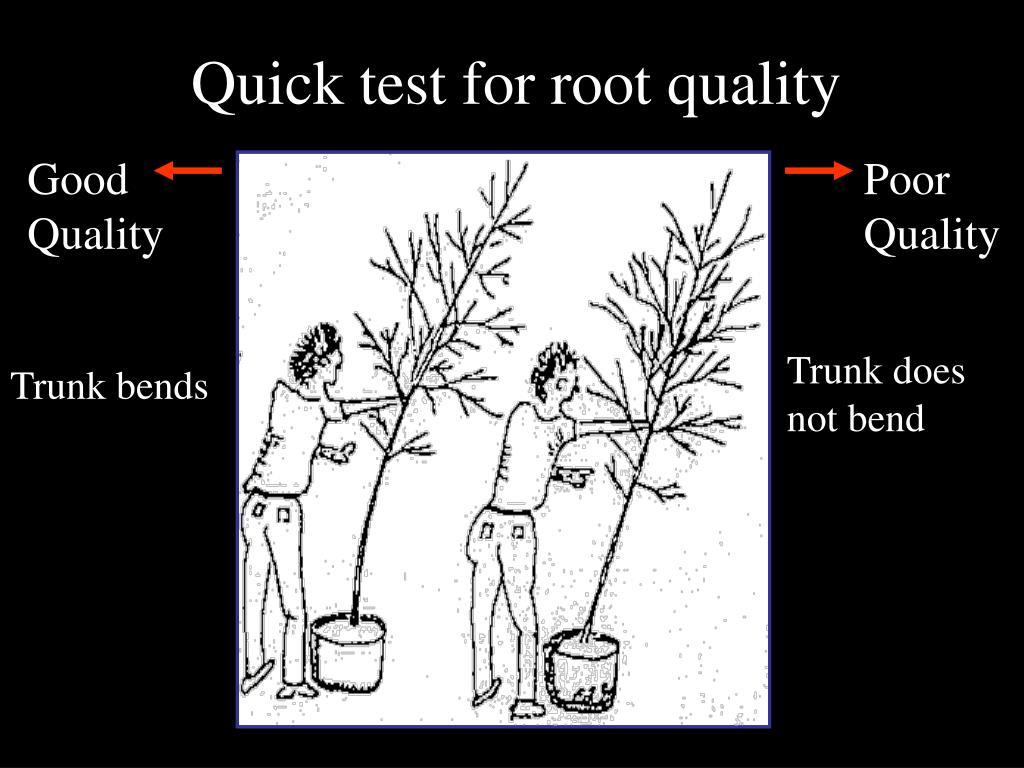 Quick test for root quality