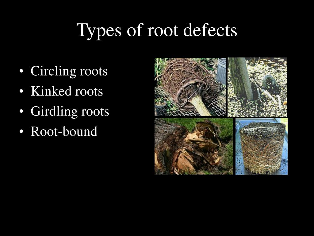 Types of root defects