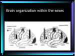 brain organization within the sexes