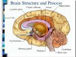 brain structure and process12