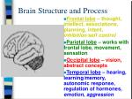 brain structure and process14
