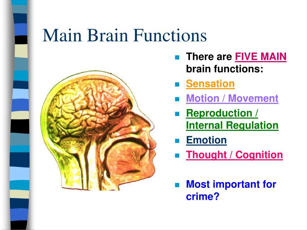 Main Brain Functions