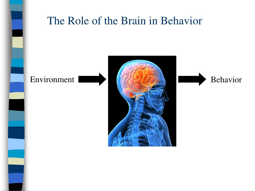 The Role of the Brain in Behavior