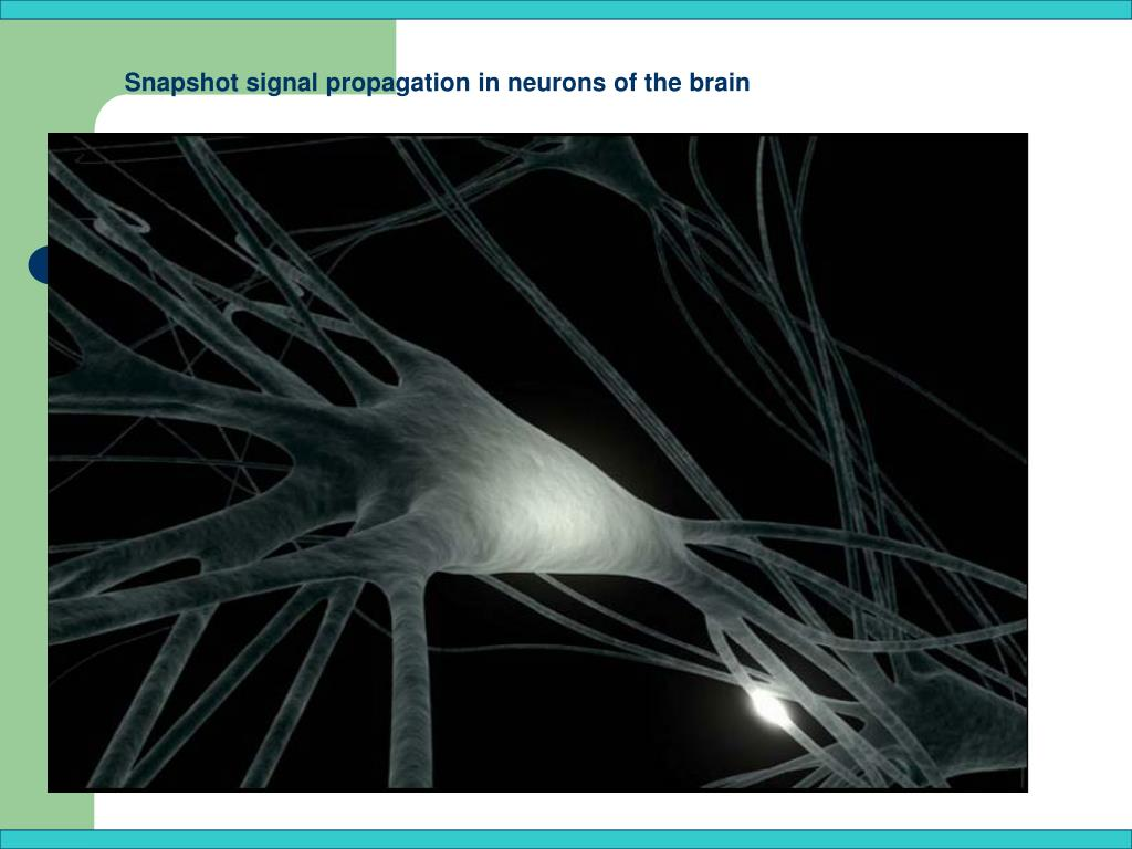Snapshot signal propagation in neurons of the brain