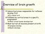 overview of brain growth