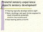 prenatal sensory experience impacts sensory development