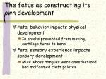 the fetus as constructing its own development
