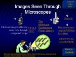 images seen through microscopes