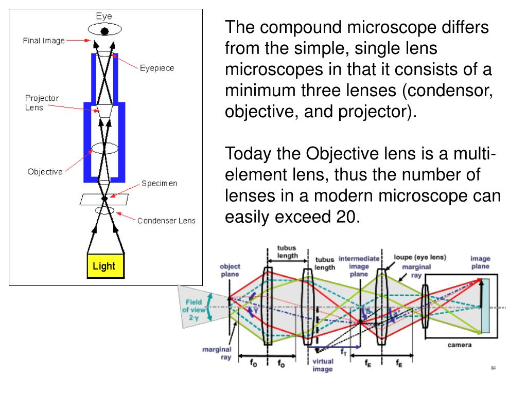 The compound microscope differs from the simple, single lens microscopes in that it consists of a minimum three lenses (condensor, objective, and projector).