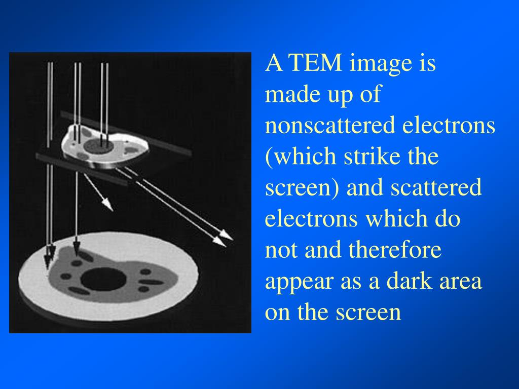 A TEM image is made up of nonscattered electrons (which strike the screen) and scattered electrons which do not and therefore appear as a dark area on the screen
