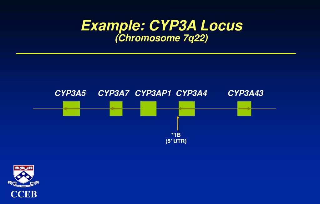 Example: CYP3A Locus
