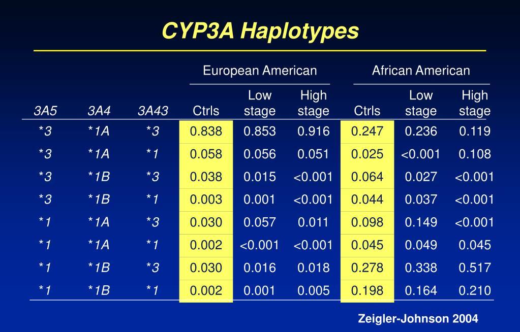 CYP3A Haplotypes