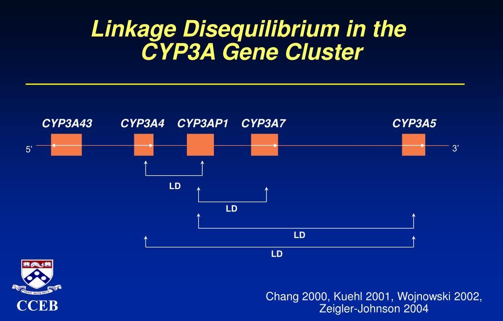 Linkage Disequilibrium in the