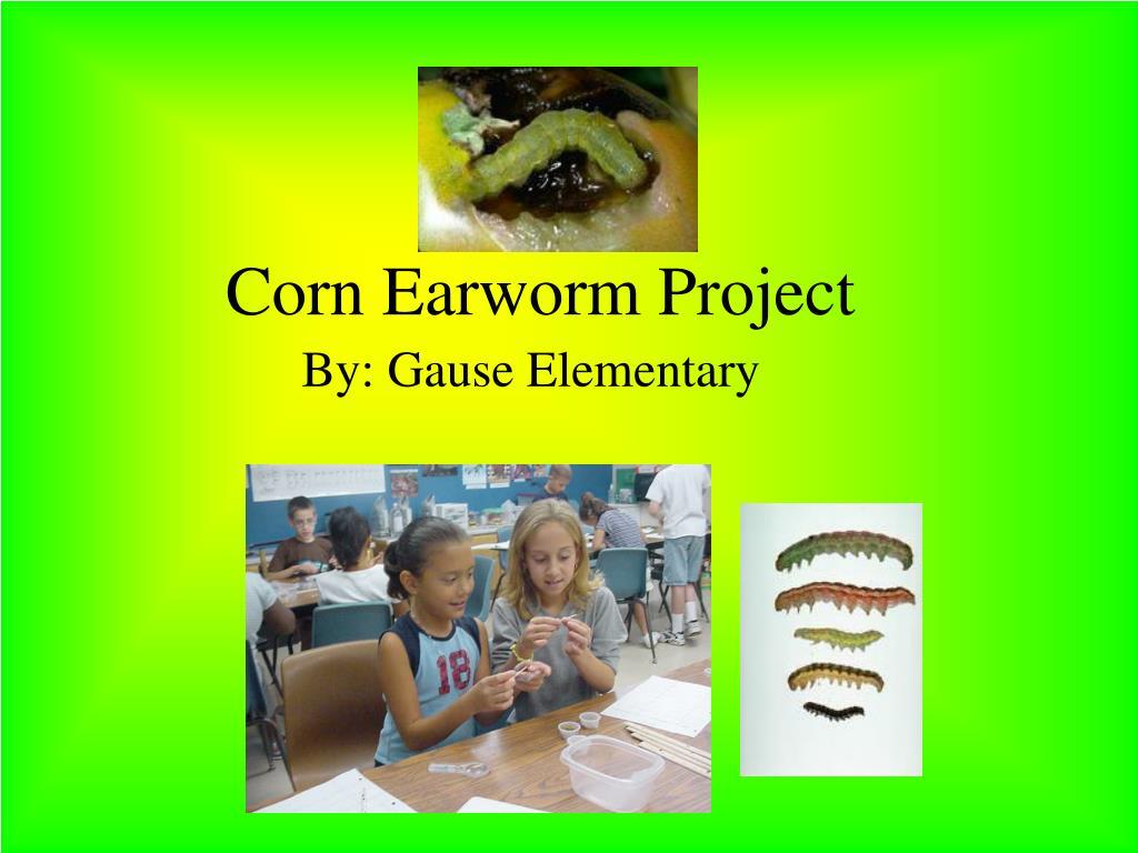 corn earworm project l.