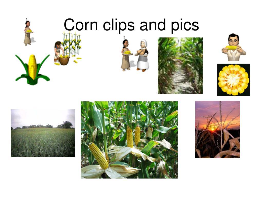 Corn clips and pics