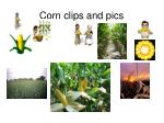 corn clips and pics