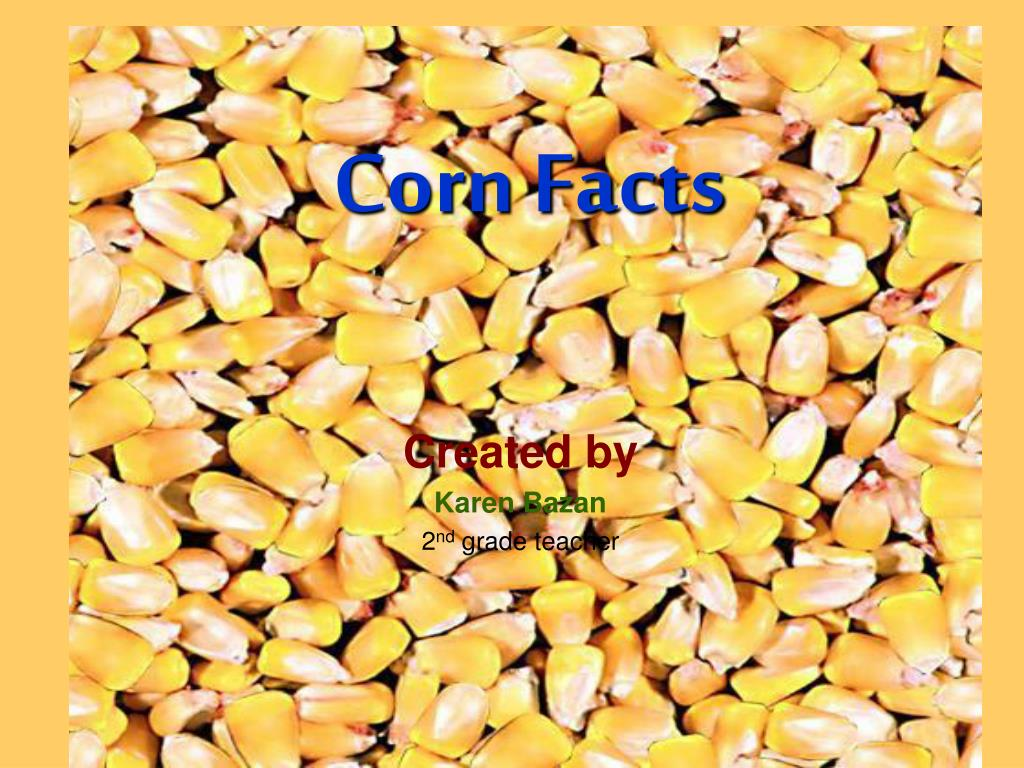 corn facts l.
