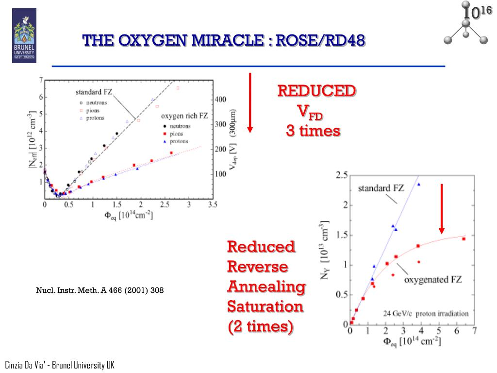 THE OXYGEN MIRACLE : ROSE/RD48