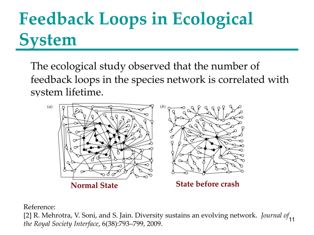 Feedback Loops in Ecological System