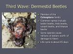 third wave dermestid beetles