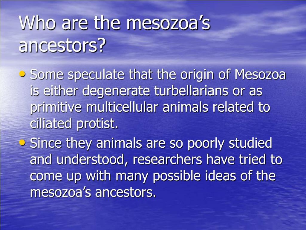 Who are the mesozoa's ancestors?